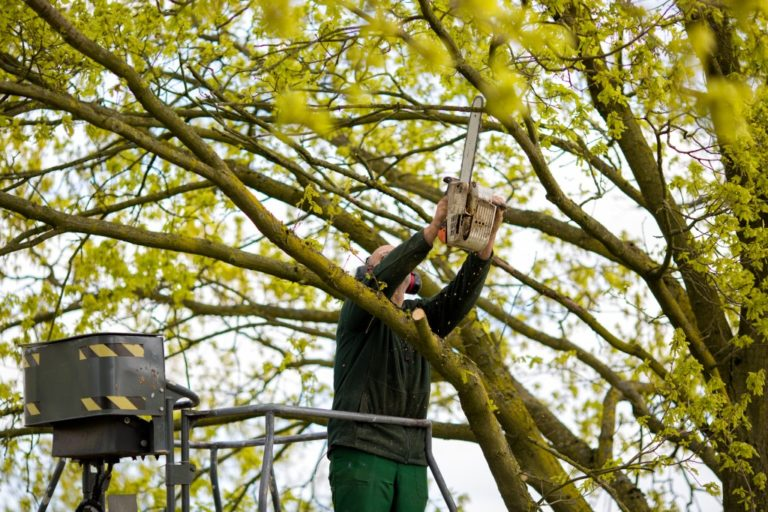 Worker trimming the tree