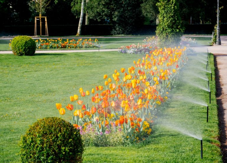 lawn with beautiful orange tulips