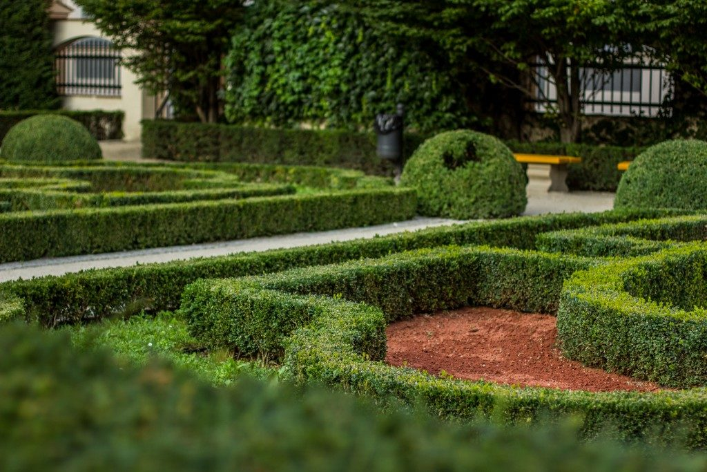 landscaping with hedges