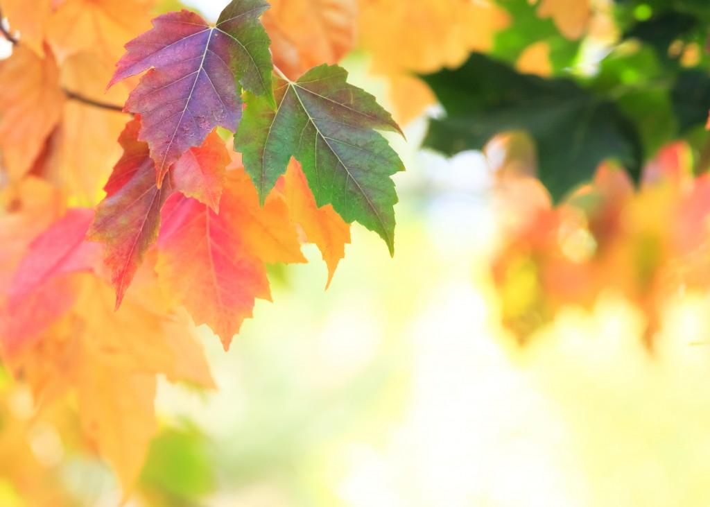 seasona leaves