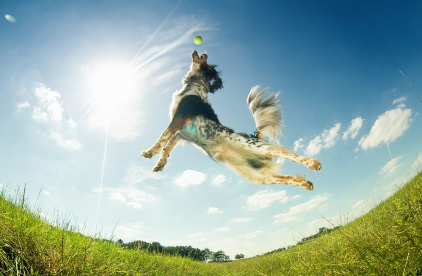 Keeping Furry Friends Safe and Healthy Throughout the Summer